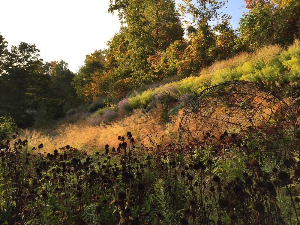 Camila-Landscape-Design-portfolio-plantings-10