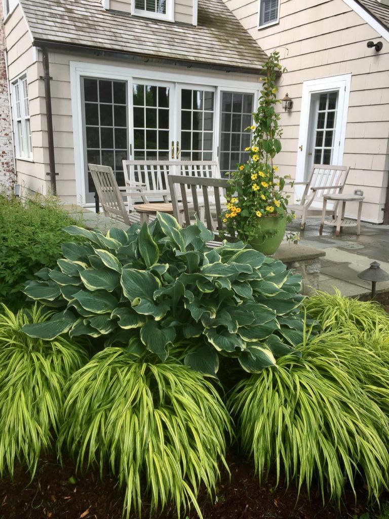 Camila-Landscape-Design-portfolio-plantings-7