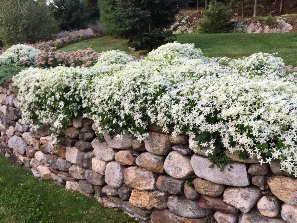 flower-plantings-design
