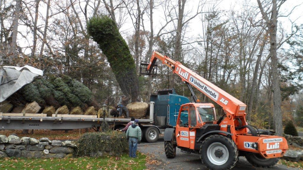 transplanting-large-trees-2